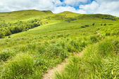 Way by Carpathian Mountains. Grassland landscape. — Stock Photo