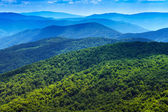 Forest in Carpathians. Beautiful mountains panorama background. — Stock Photo