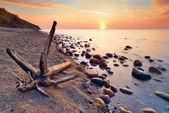 Tranquil sunshine over Baltic Sea coast. Trunk on beach. — Stock Photo
