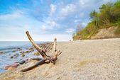 Landscape with trunk on beach.  The Baltic Sea coast, Poland. — Photo