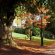 Autumn park scene — Stock Photo #14358347