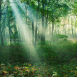 Sun rays between trees in forest — Stock Photo #26874859