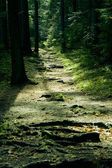 Green landscape with trees and path — Photo