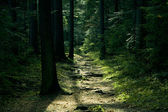 Green landscape with trees and path — Stock Photo