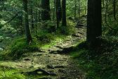 Zelená krajina se stromy a cestu — Stock fotografie