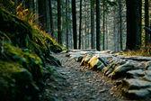 Ladscape di montagna con alberi e percorso — Foto Stock
