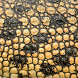 Stock Photo: Crocodile skin