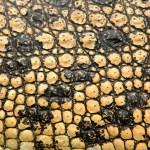 Crocodile skin — Stock Photo #27359271