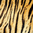 Texture of tiger skin — Stock fotografie