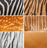 Animal skin — Stock Photo