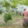 Stock Photo: Farmer spray pesticide