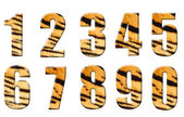 Alphabet in style of a tiger skin — Stock Photo