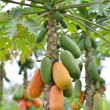 Papaya — Stock Photo