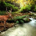 Sika deer — Stock Photo #28708923