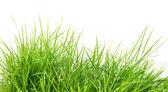 Fresh spring green grass i — Stock Photo