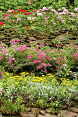 Home and garden — Stock Photo
