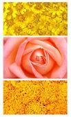 3 style flower — Photo