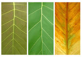 3 style of leaves — Stock Photo