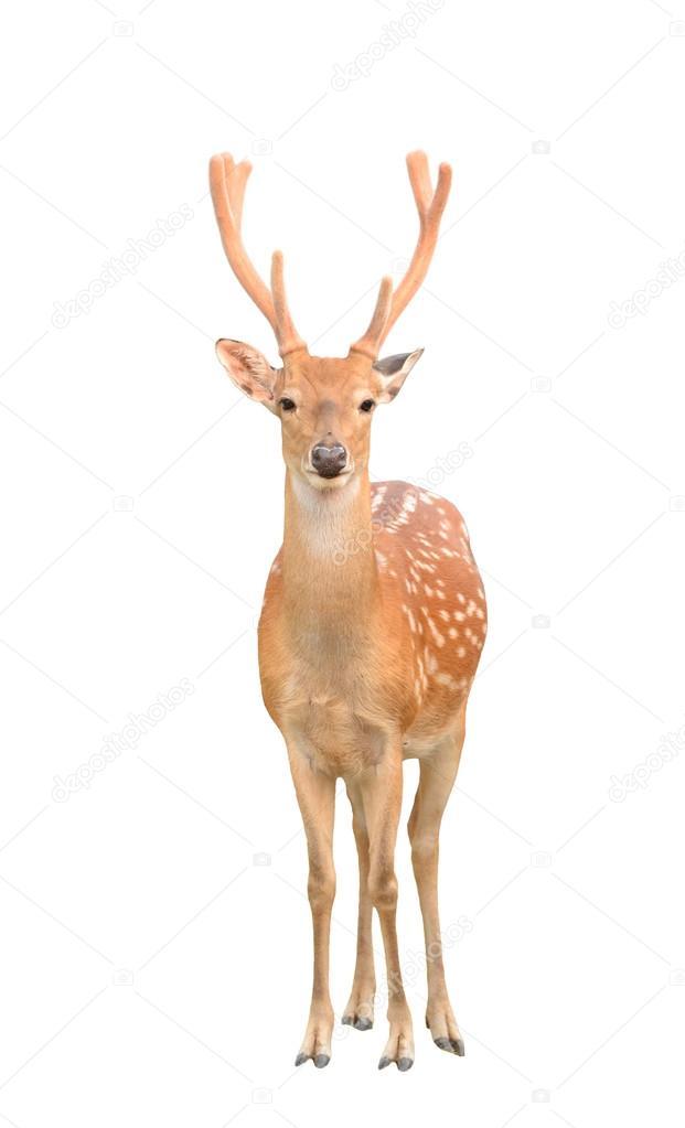 壁纸 动物 鹿 621_1023 竖版 竖屏 手机