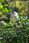 Black - crowned night heron — Stock Photo