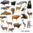 Stockfoto: Asianimals collection isolated on white background