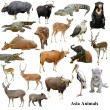 Stock Photo: Asianimals collection isolated on white background
