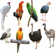 Collection of bird isolated — Stock Photo #42883065