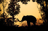 Asia elephant in the forest — Foto Stock