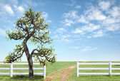 White fence on green grass with blue sky — Stok fotoğraf