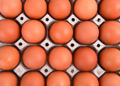 Eggs in paper tray — Stock Photo
