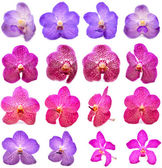 Beautiful blooming orchid isolated  — Stock Photo