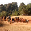 Grazing animals - Some small African children lead their animals - Stock Photo