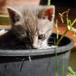 Stock Photo: Cat Gardener