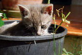 The Cat Gardener — Stock Photo
