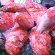 Stock Photo: At market 270 - fish counter