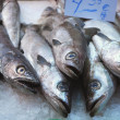 Stock Photo: At market 263 - fish counter