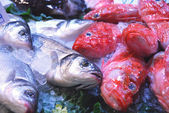 At the market 273 - the fish counter — Stock Photo