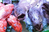 At the market 269 - the fish counter — Stock Photo