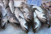 At the market 263 - the fish counter — Stock Photo
