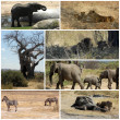 Images from savanna - Tanzania - Africa — Stock Photo