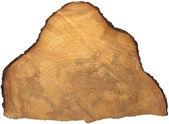 Sezione di tronco d'albero isolato — Foto Stock