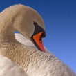 Mute Swan on Blue Sky — Stock Photo #14132433