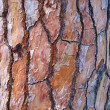 Stock Photo: Maritime Pine Bark