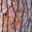 Maritime Pine Bark — Stock Photo