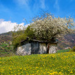 Old House on Flowery Meadow - Foto de Stock  