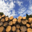 Wooden Logs with Blue Sky on Background — Stock Photo