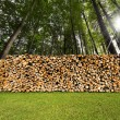Pile of Chopped Firewood in the Woods — Стоковая фотография