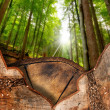 Trunk Sections in the Woods — Stockfoto