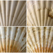 Four Close up of Seashells — Foto de Stock