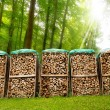 Pile of Chopped Firewood in the Woods — Stock Photo #46839093